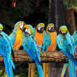 Macaw birds — Stock Photo #28548501