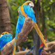 Macaw birds — Stock Photo #28549097