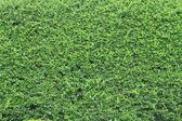 Зеленый фон листа — Стоковое фото