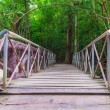 Stock Photo: Walkway wooden bridge in forests