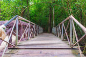 Walkway wooden bridge in the forests — Stock Photo
