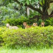Four dogs in the park — Stock Photo #29082861