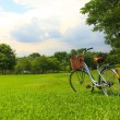 Bicycles in the park — Stock Photo