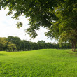 Trees and lawn in green park — Stock Photo