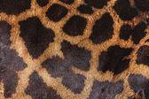кожа жирафа — Стоковое фото