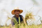 Asian farmer — Stock Photo