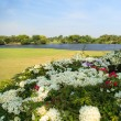 Stock Photo: Flowers on beautiful golf course