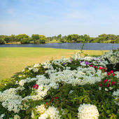 Flowers on beautiful golf course — Stock Photo