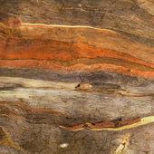 Bark texture background — Stock Photo