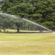 Watering — Stock Photo #38070141