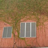 Enredadera verde — Foto de Stock