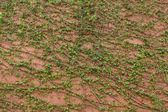 Zielone pnącza — Zdjęcie stockowe