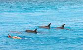 ψαροντούφεκο με δελφίνια — Φωτογραφία Αρχείου