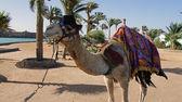 Impressions of hurghada, egypt, june 2013 — Stock Photo