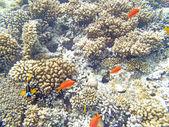 Snorkeling in hurghada — Stock Photo