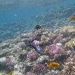 Snorkeling in the red sea, hurghada — Stock Photo