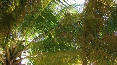 Palma tropicale — Video Stock