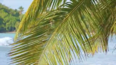 Green palm blad — Stockvideo