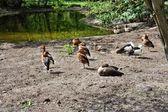 在池塘上的鸟 — 图库照片