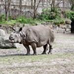 Постер, плакат: Rhino africa