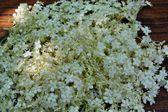 Elderberry herbs — Stock Photo