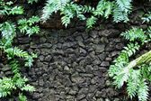 Moss and fern on stone wall — Stock Photo