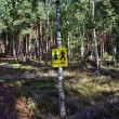 Stock Photo: No entry forest