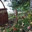 Stock Photo: Mushroom and basket