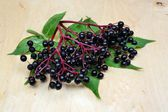Elderberry fruit — Stock Photo