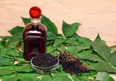 Elderberry — Stock Photo