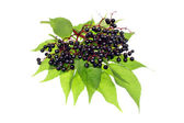 Elderberries — Stock Photo