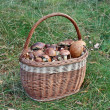 Stock Photo: Basket of mushrooms