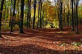 Autumn walk — Stock Photo