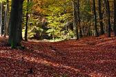 Park in autumn — Stock Photo