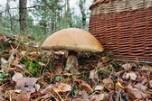 The giant mushroom and basket — Foto de Stock