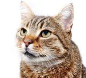 Cat gaze — Stock Photo