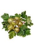 Green gooseberry — Stock Photo