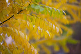 Branches with yellow leaves background — Stock Photo