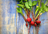 Radishes fresh-picked from garden on blue board background — Stock Photo