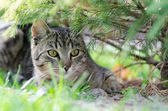 Domestic cat in garden — Stock Photo