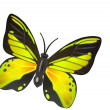Yellow butterfly illustration — Stock Photo