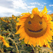 sunflower happyface — Stock Photo