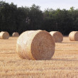 Straw bales of stubble. — Stock Photo