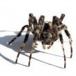 Spider. — Stock Photo