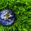 Globe in green grass. — Stock Photo