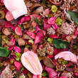 Dried flowers background. — Stock Photo
