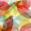 Colored leaves background — Foto de Stock