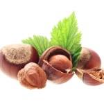 Hazelnuts isolated — Stock Photo
