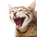 ładny kot szczęśliwy — Zdjęcie stockowe
