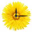 Royalty-Free Stock Photo: Dandelion flower - clock isolated on white background.